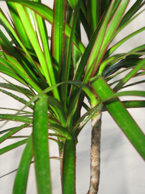 Rostliny v terárichí  TERAECHIS