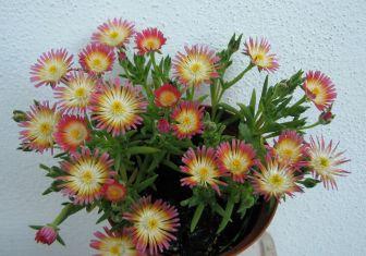Venkovní rostliny — Květinářství Plantica